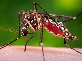 WHO starts special meeting on Zika virus