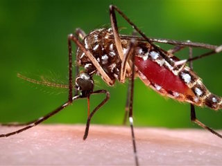 CDC urges Congress to act quickly on Zika