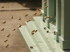 Thousands of bees swarm woman's car in Wales