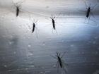 Mosquitoes now spreading Zika virus in US