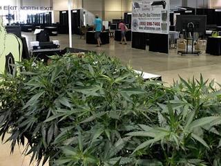Should medical marijuana be legalized?