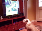 WATCH: Dog taught tough lesson about listening