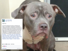 Face of dog left at pound will break your heart
