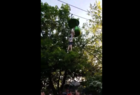 Video captures teen falling from Six Flags ride