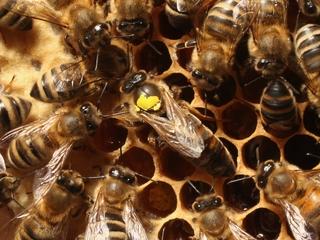 400,000 bees stolen from Oklahoma apiary