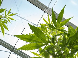 Agency urges judge to not block new pot law